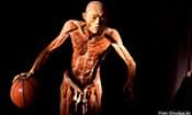 Folder do Evento: O Fantástico Corpo Humano