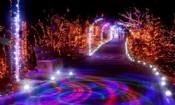 Folder do Evento: Iluminação Natalina