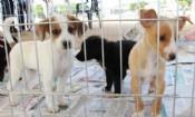 Folder do Evento: Doação de Cães