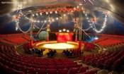 Folder do Evento: Reality Circus