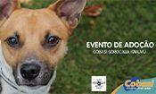 Folder do Evento: Adoção em Sorocaba