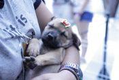 Folder do Evento: Adota Pet: leve um amiguinho para casa