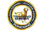 Adestramento Poncidog Golden Kennel Atitude Animal