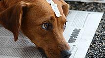 Quase 2.500 cães e gatos foram castrados em mutirão na Zona Norte de Sorocaba